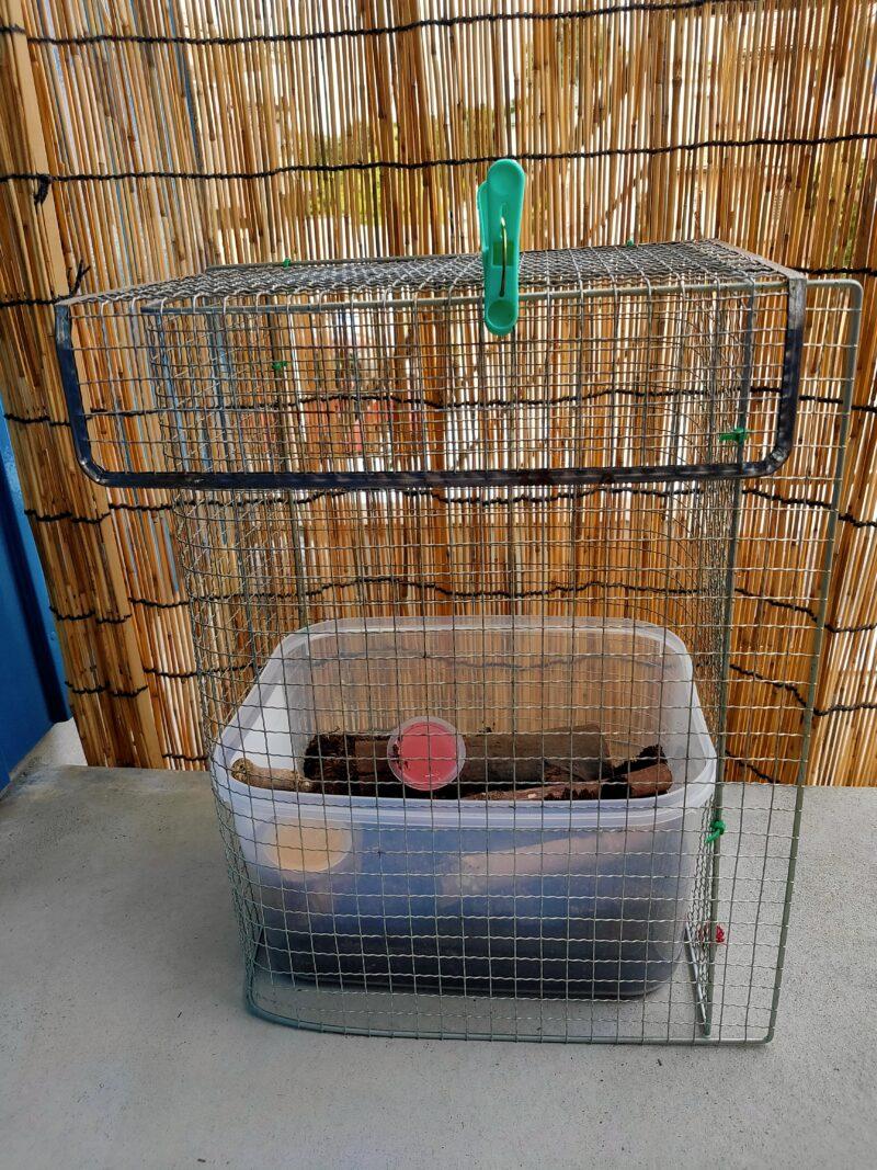 カブトムシの入った飼育ケース完成品