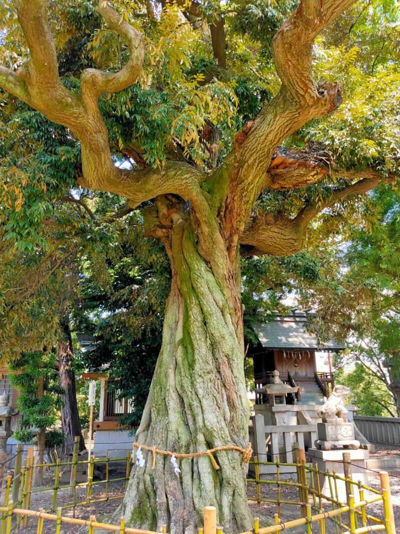 神社の立派なご神木